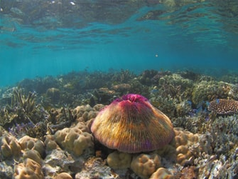 Uri-Marine-Reserve-Snorkelling-Tour-2