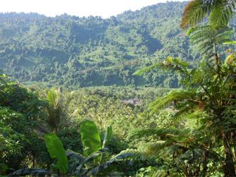 una-wild-man-jungle-adventure-1